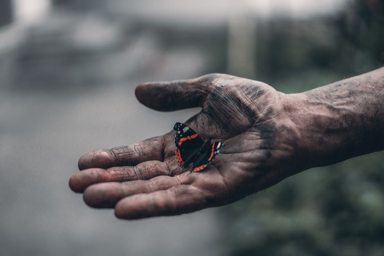 a dirty hand with a butterfly sitting on it gently
